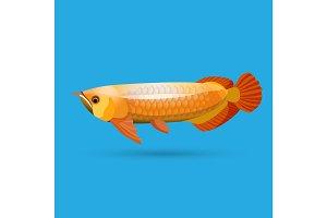 Isolated golden arowana. Freshwater bony fish bonytongues.
