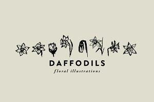 Daffodils / hand-illustrations