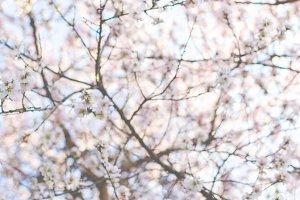 Spring blurred background