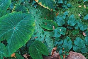 Tropical greenery plant