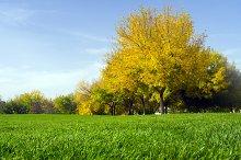 Autumn landscape tree
