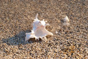 White seashell on the beach
