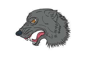 Grey Wolf Head Growling Drawing