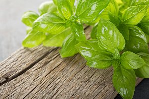 Fresh green basil leaves on a rustic board