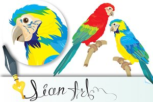Blue Yellow and Red Blue Macaw parro