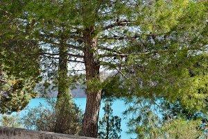 Pine tree and turquoise lake