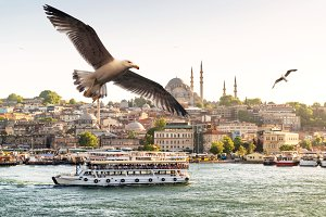 Seagulls flying on the Golden Horn