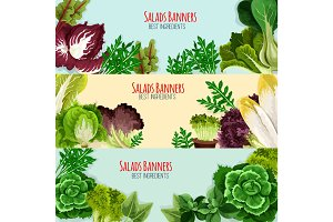 Salad greens and leaf vegetables banner set