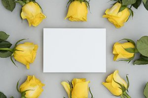 Yellow rose with blank label