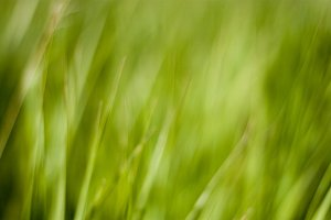 Blurred Greenery Grass Background