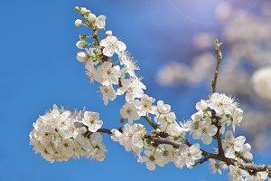 Spring flower on tree