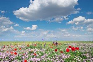Spring flowers  in meadow