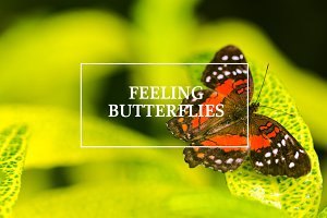 Feeling Butterflies