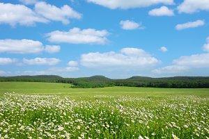 Spring meadow landscape