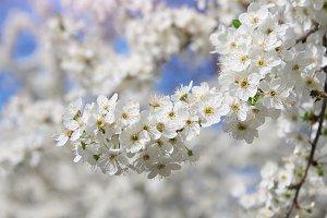 Spring flowers on tree.