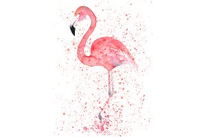 Watercolor Flamingo In Splatter
