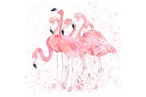Watercolor Flamingos In Splatter