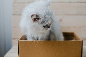 White cat sits in a box