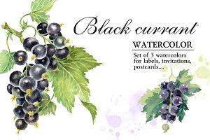 Watercolor Black Сurrant