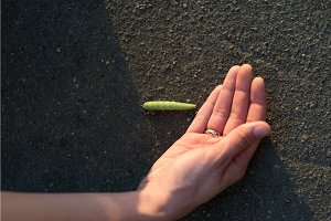 Young woman traveler touches giant green caterpillar laying on the gray asphalt lit by sun