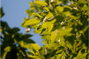 green foliage leaves on the blue sky. selective focus macro shot with shallow DOF spring background