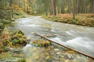 Autumn season river in the forest