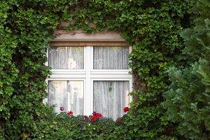 The white window.