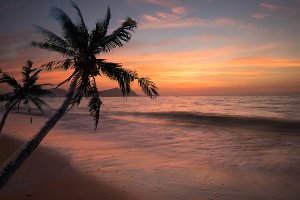 Palm tree sandy beach sunrise.