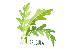 Green arugula leaves with colourful inscription under it isolated