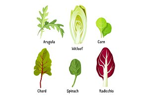 Collection of different plants arugula, witloof, corn, chard, spinach, radicchio