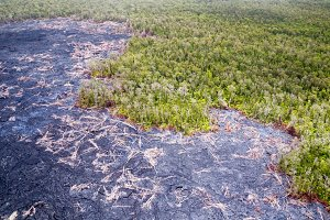 Forest and lava flows