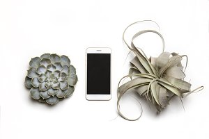 Phone mock up & succulents