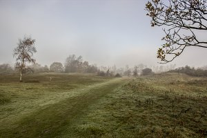 Misty Autumn Morning IIX