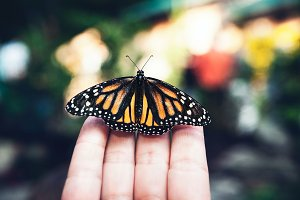 Butterfly / Stock Photo