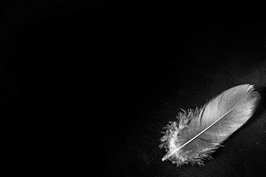 Feathers on a dark background. Place for text.
