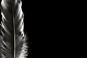 Feathers in the dark. Light falling on beautiful feathers. Great plan. Can be used for presentations, calendar, screensavers.