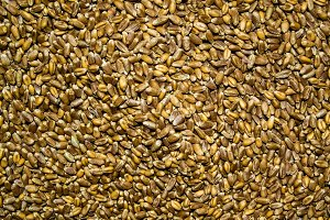 Processed organic wheat grains background.