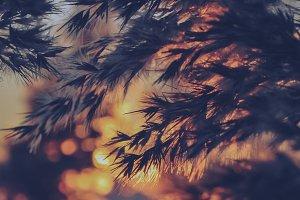 Reed Grass #05 (Vintage Series)