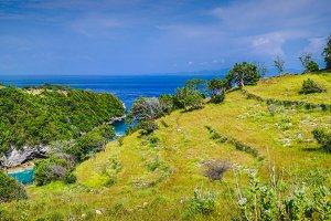 Trees on the Rocktop near Atuh Beach, Nusa Penida, Bali Indonesia