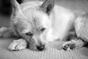 Thinking Dog