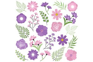 Purple & Pink Flowers