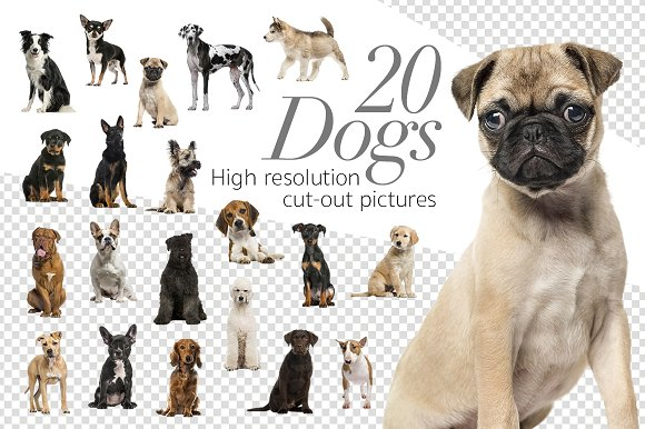 20 Dogs - Cut-out High Res -Graphicriver中文最全的素材分享平台