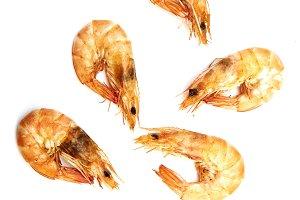 fresh shrimp isolated on white background.