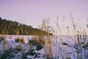 A Field in Winter #02
