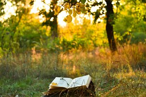 Book of poetry under a tree
