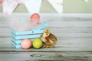 Spring Chicken ~ Baby chick and eggs