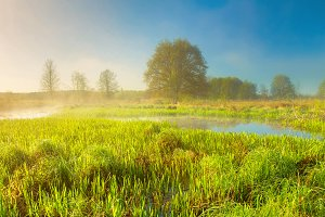 Green meadow in spring morning