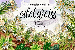 Watercolor Edelweiss