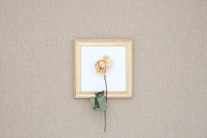 Yellow dried rose on the frame.
