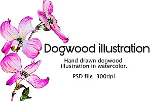 Watercolor dogwood illustrations